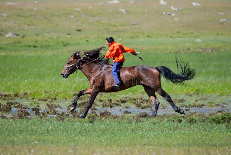 Sul horseback attraverso la steppa immagini stock libere da diritti
