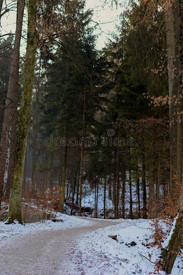 Sul modo a Uetliberg fotografia stock libera da diritti