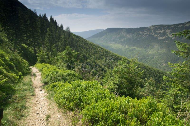 Sul pendio della montagna Stoh nelle montagne giganti in repubblica Ceca fotografia stock