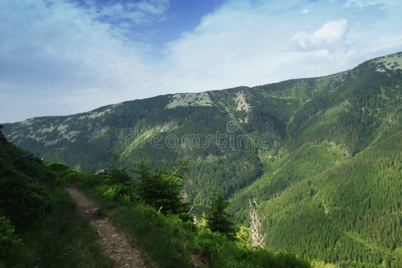 Sul pendio della montagna Stoh nelle montagne giganti in repubblica Ceca immagini stock libere da diritti