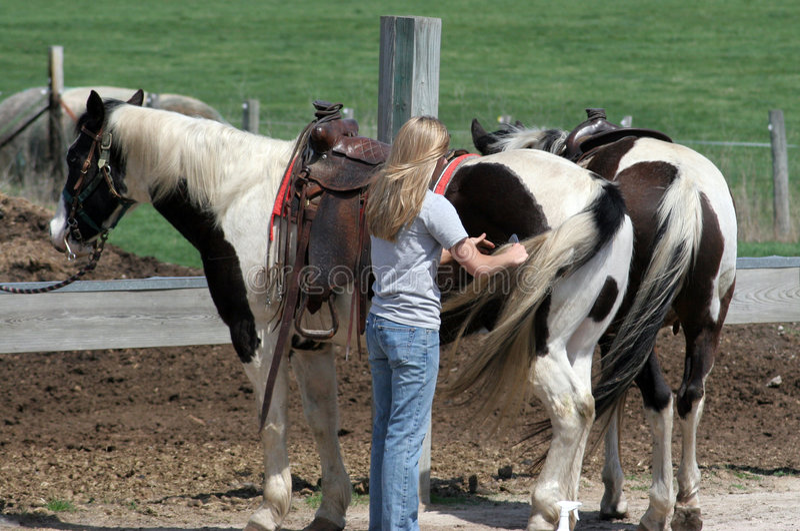Sul ranch fotografia stock