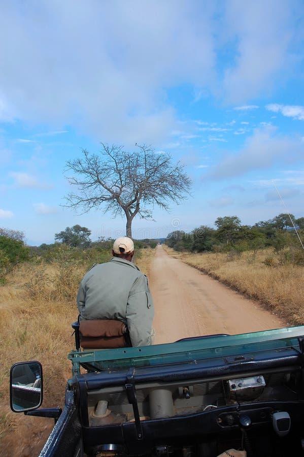 Sul safari immagine stock