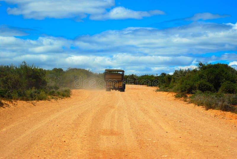 Sul safari in Sudafrica immagini stock