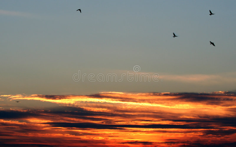 Sul tramonto dell'ala fotografie stock