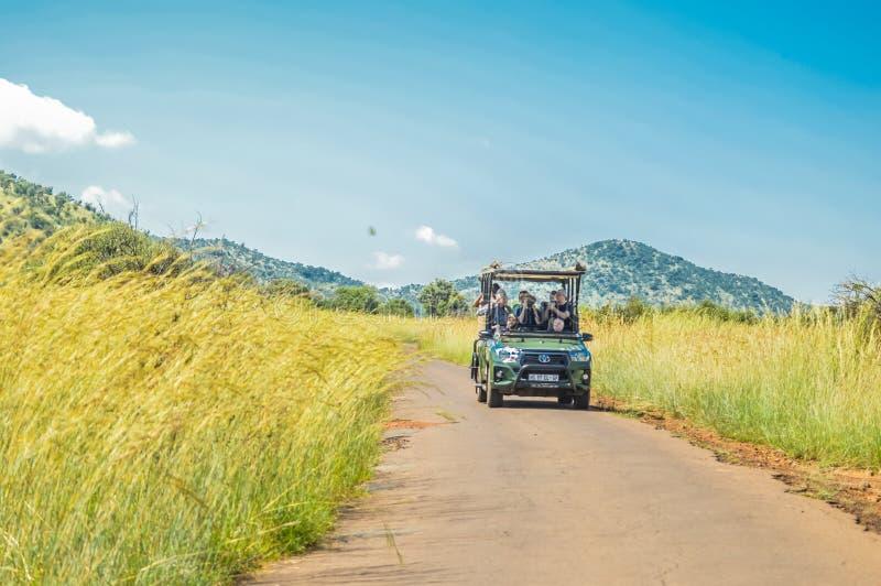 Sul verdadeiro autêntico - experiência africana do safari no bushveld em uma reserva do jogo foto de stock