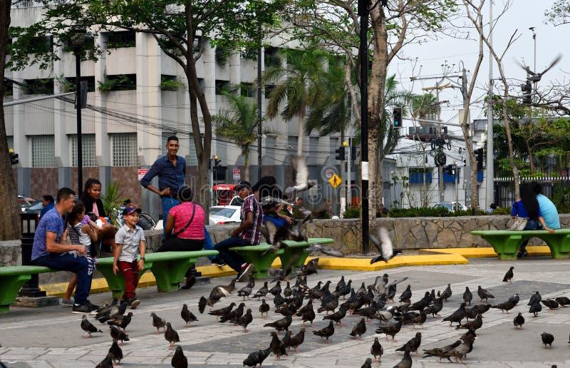 Sula de San Pedro honduras fotos de stock