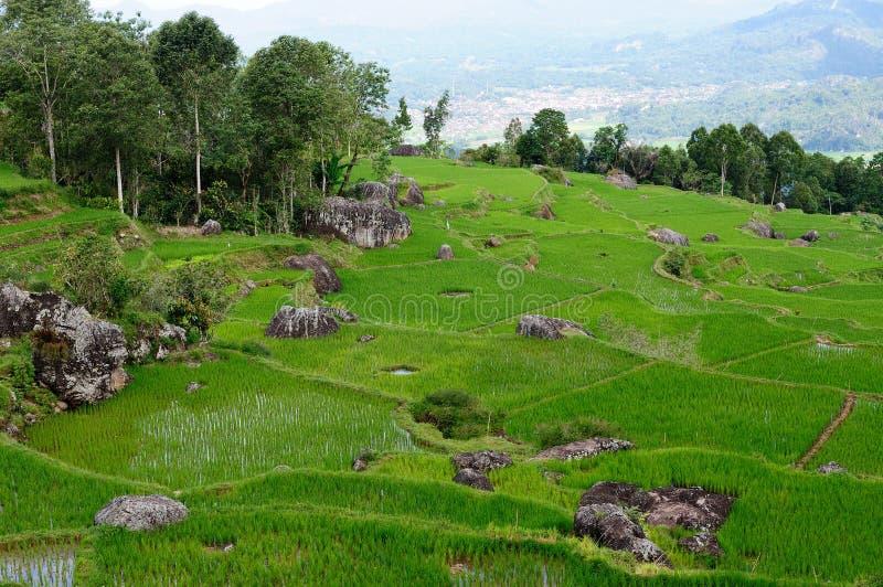 Sulawesilandschap in Indonesië stock fotografie