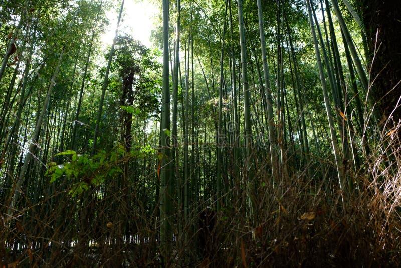 Sulco de bambu fotografia de stock