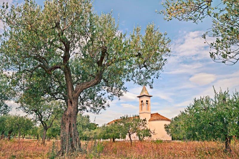 Sulco verde-oliva em Abruzzo, Itália imagem de stock