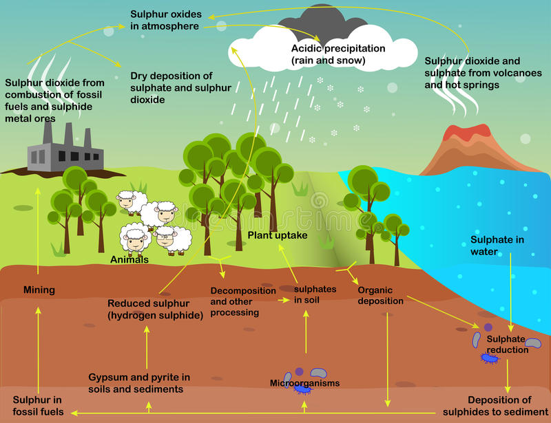 The sulfur cycle stock illustration