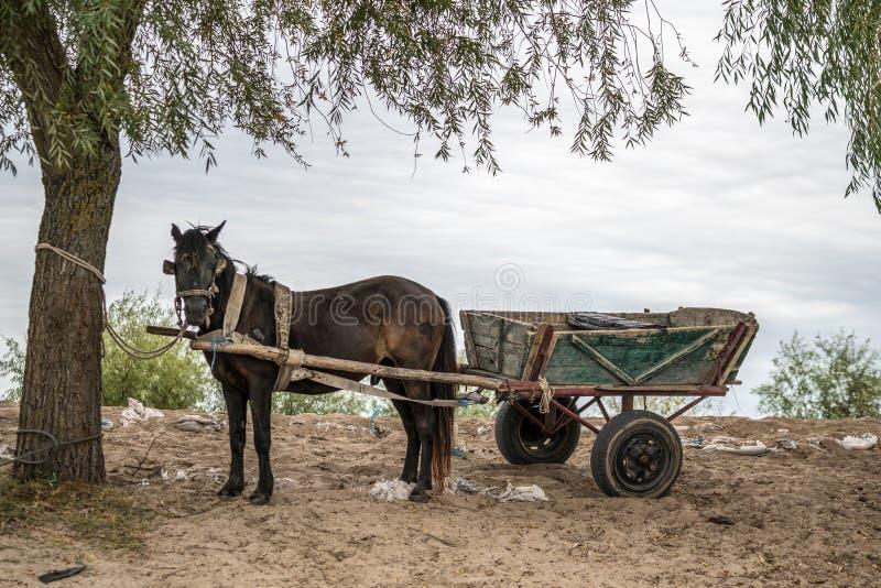 SULINA, ΔΟΎΝΑΒΗΣ DELTA/ROMANIA - 23 ΣΕΠΤΕΜΒΡΊΟΥ: Άλογο και κάρρο μέσα στοκ φωτογραφίες