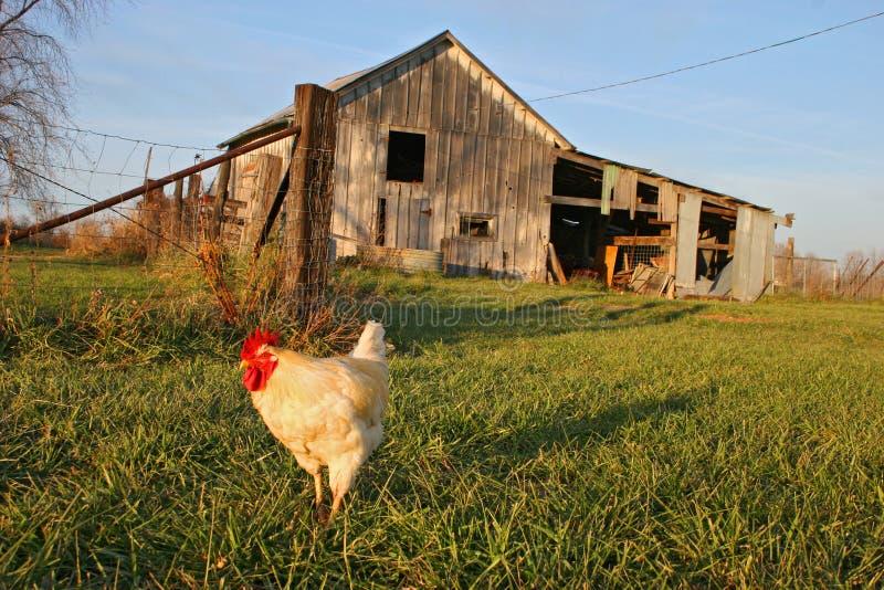 Sull'azienda agricola fotografia stock libera da diritti