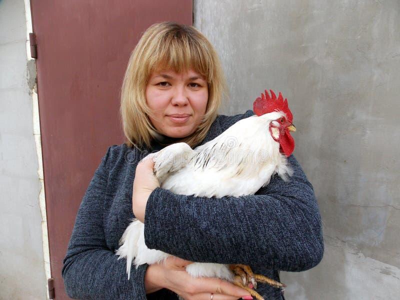Sull'immagine è Irina di modello che sta tenendo un bello, gallo bello immagine stock