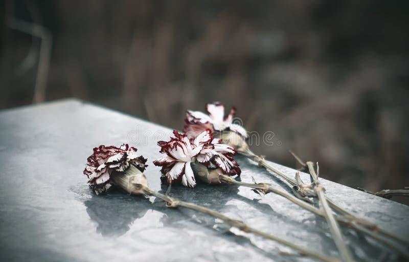 Sulla bugia della lapide del granito color scarlatto secco del garofano immagine stock