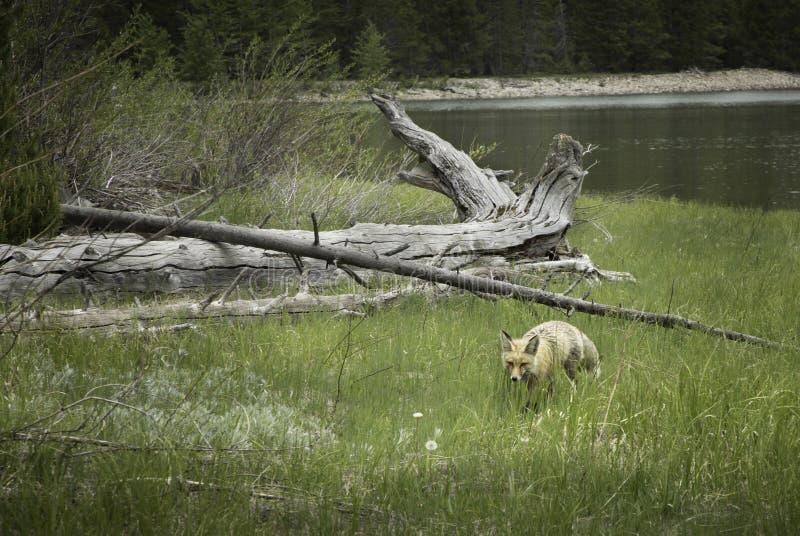 Sulla caccia fotografia stock