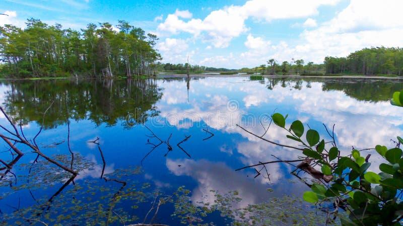 Sulla costa di un grande stagno di palude in una parte delle Everglades originali della Florida fotografie stock