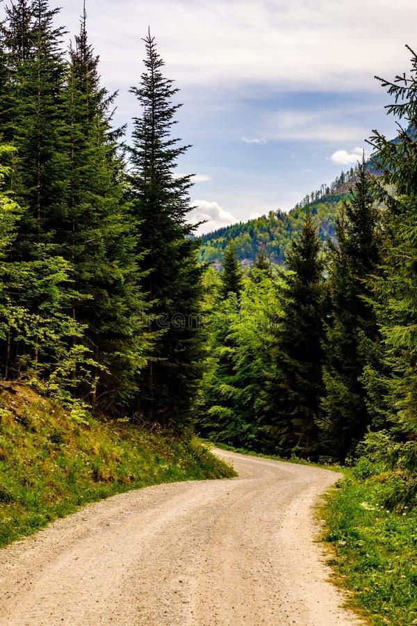 Sulla direzione da Grunberg a Laudachsee in Gmunden, l'Austria immagini stock
