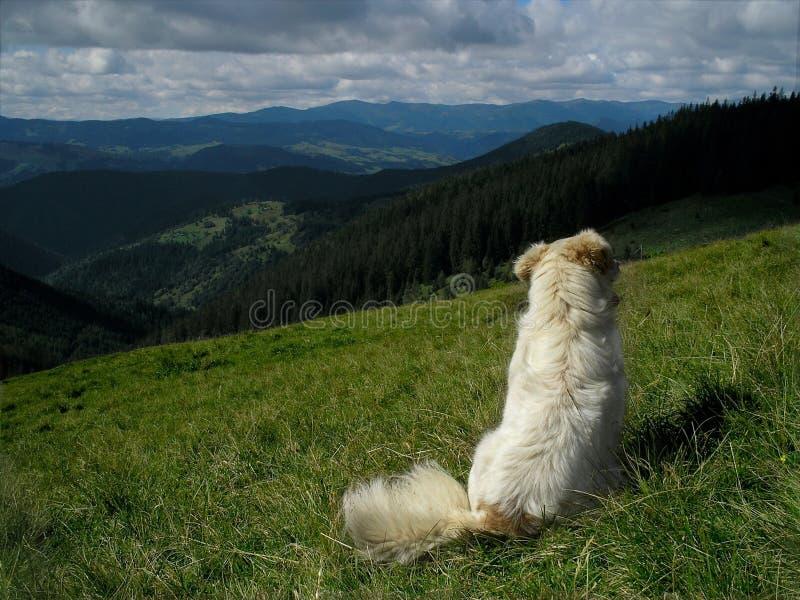 Sulla natura con il cane fotografie stock
