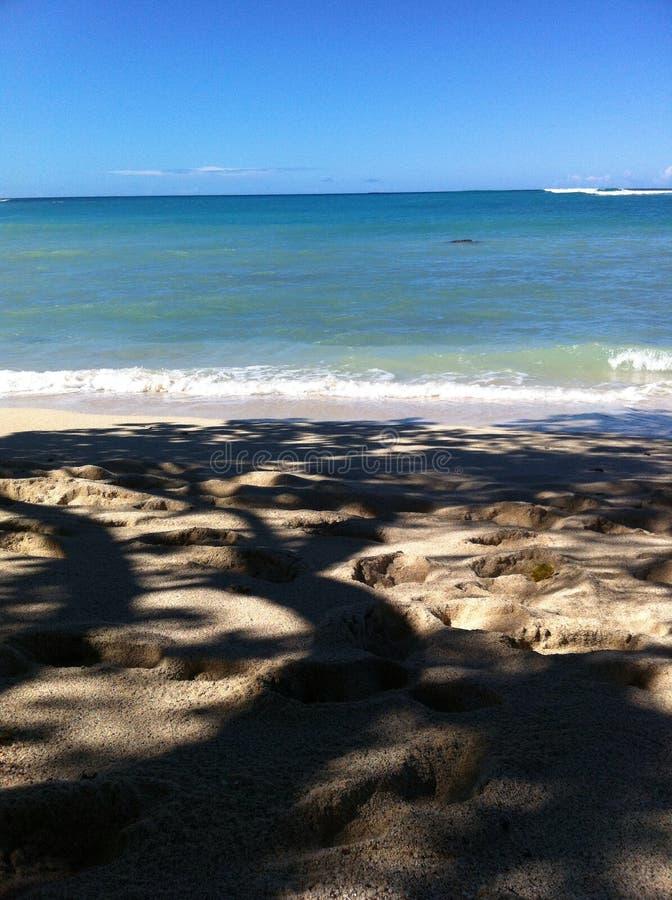 Sulla spiaggia sotto l'albero ombreggiato al parco di stato di Kekaha Kai fotografia stock libera da diritti