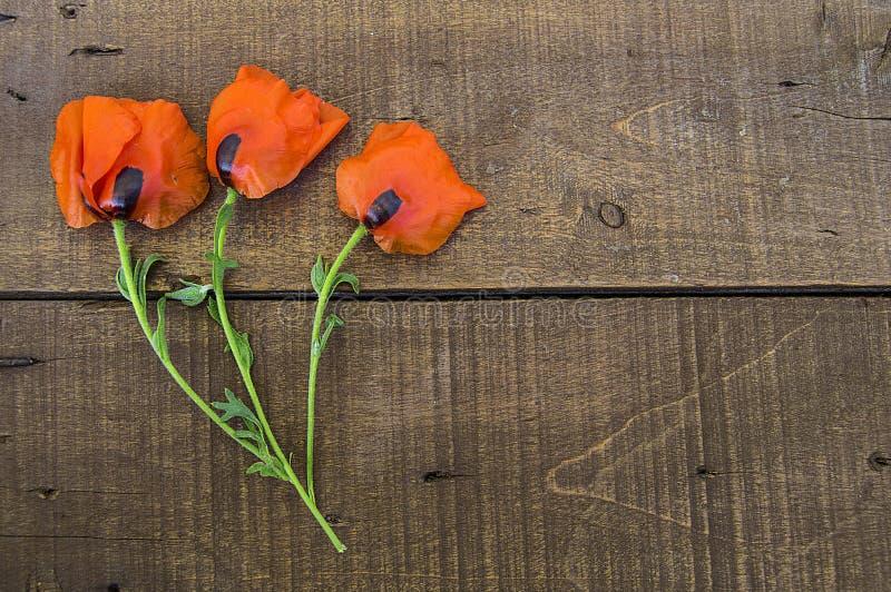 Sulla terra bianca sono i fiori del papavero, le foglie del papavero, i migliori fiori del papavero per i progetti e le progettaz fotografia stock