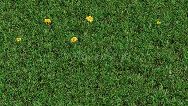 Sulla vista del campo di erba selvatica e di soltanto cinque denti di leone capi gialli immagini stock libere da diritti