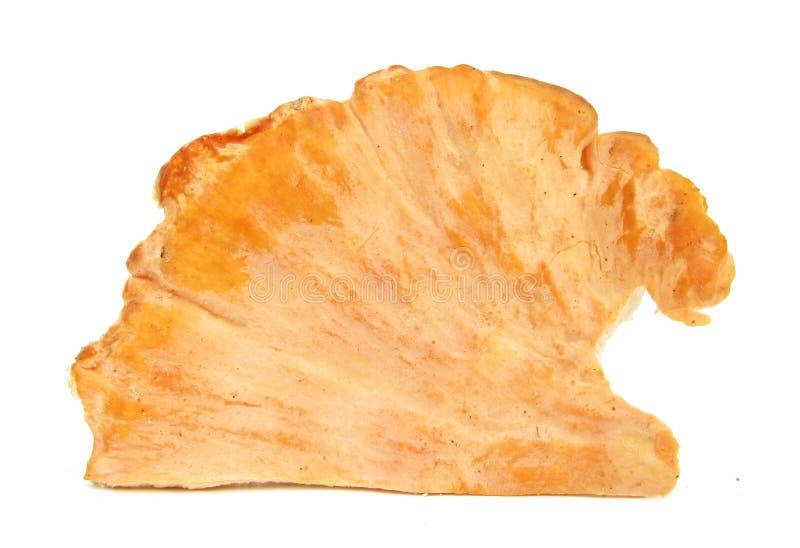 Sulphure de Laetiporus de champignon de couche de poulet d'interpréteur de commandes interactif de soufre photo libre de droits