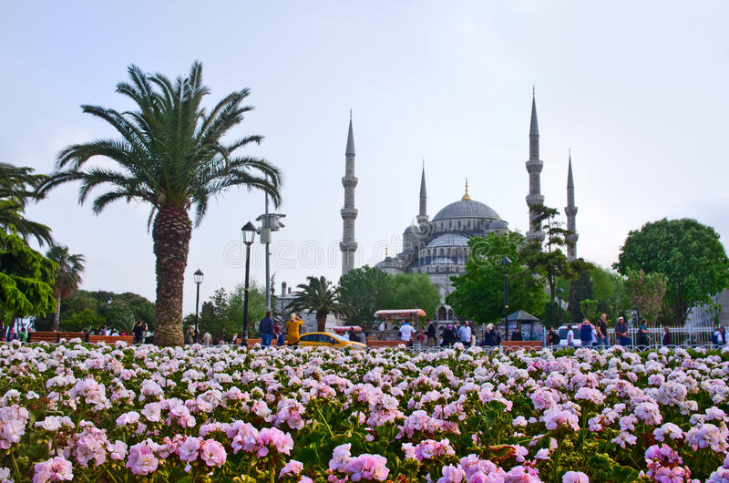 Sultan Ahmed Mosque i Istanbul kalkon royaltyfria bilder