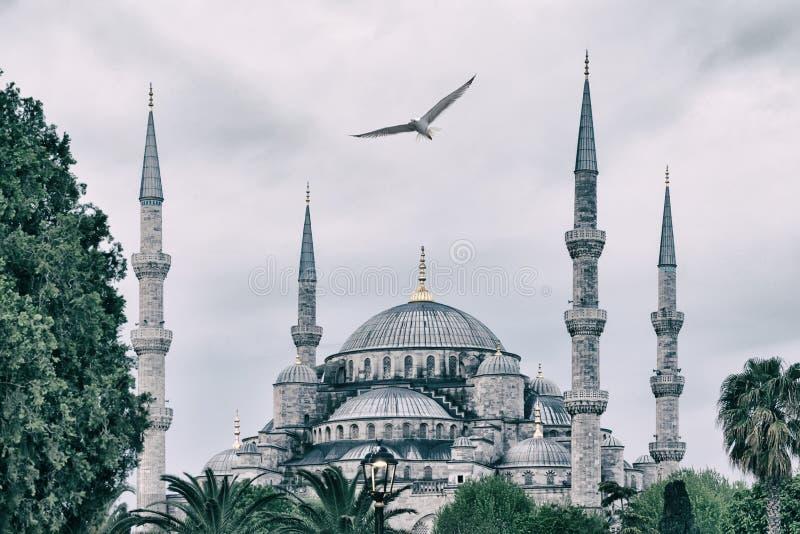 Sultan Ahmed Mosque oder blaue Moschee mit Seemöwe im Himmel stockbild