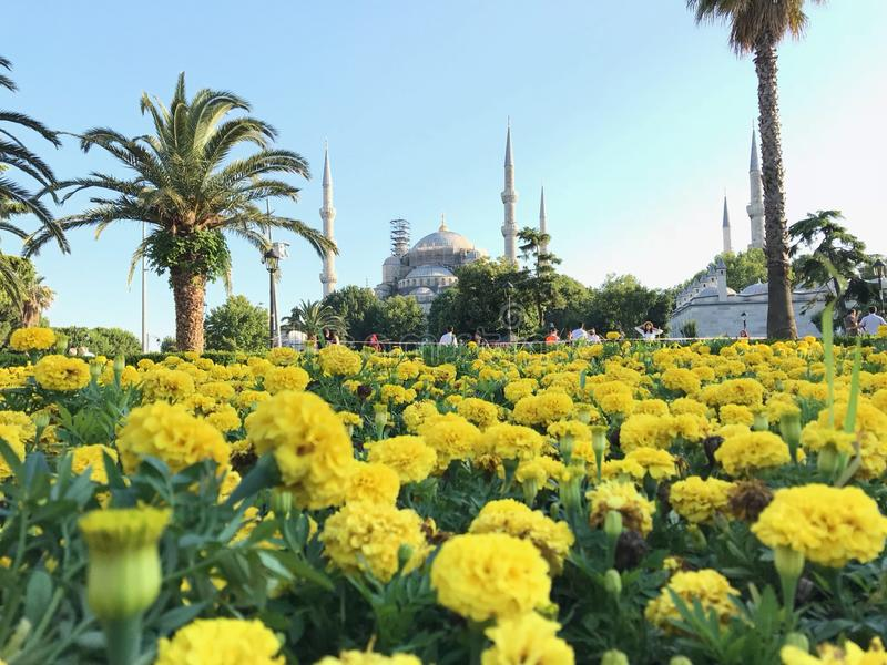 Sultan Ahmet immagine stock