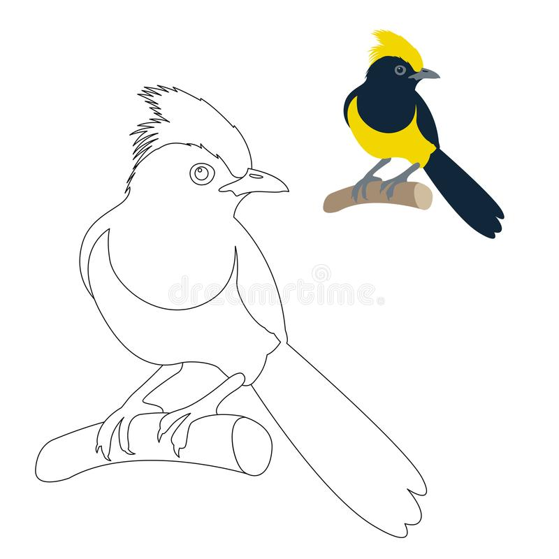 Download Sultan Tit Bird Vector Illustration Coloring Page Stock