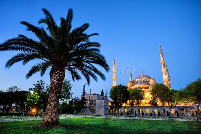Sultanahmet moskéSultanahmet moské med palmträdet arkivfoto