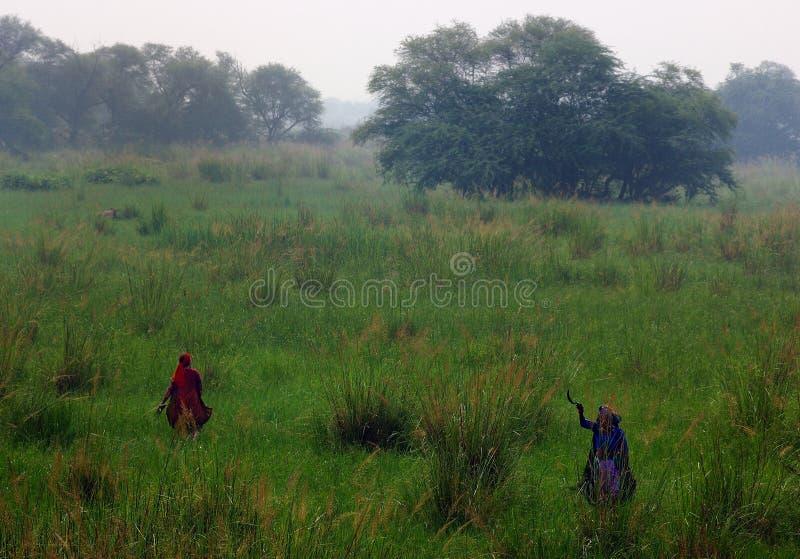 sultanpur святилища птицы 7 9 стоковая фотография rf