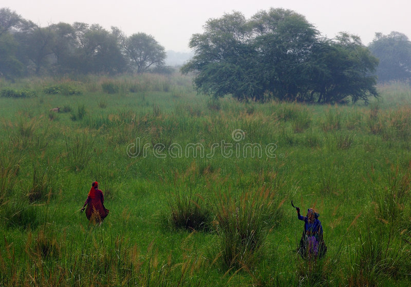 Sultanpur Bird Sanctuary (7/9). Indian farmers working on a field, Sultanpur Bird Sanctuary, Haryana, India royalty free stock photography