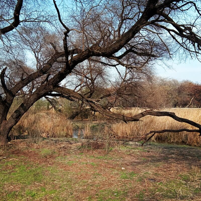 Sultanpur national park gurugram haryana India. Beautiful national park bird sanctuary India bird sanctuary royalty free stock photo