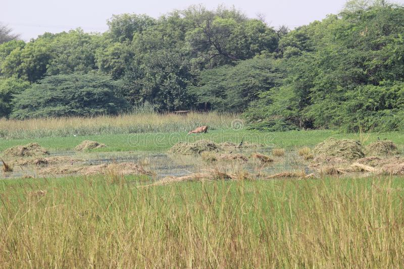 Sultanpur National Park. Is located in Gurugram, Haryana. The park is famous for local and migratory birds royalty free stock images