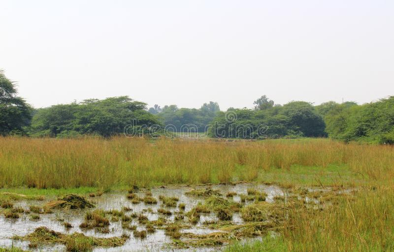 Sultanpur National Park royalty free stock photo