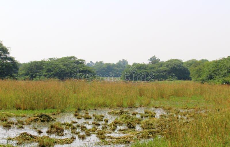Sultanpur nationalpark royaltyfri foto