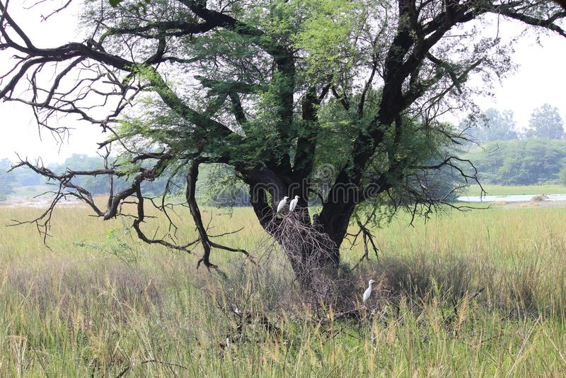 Sultanpur nationalpark arkivfoton