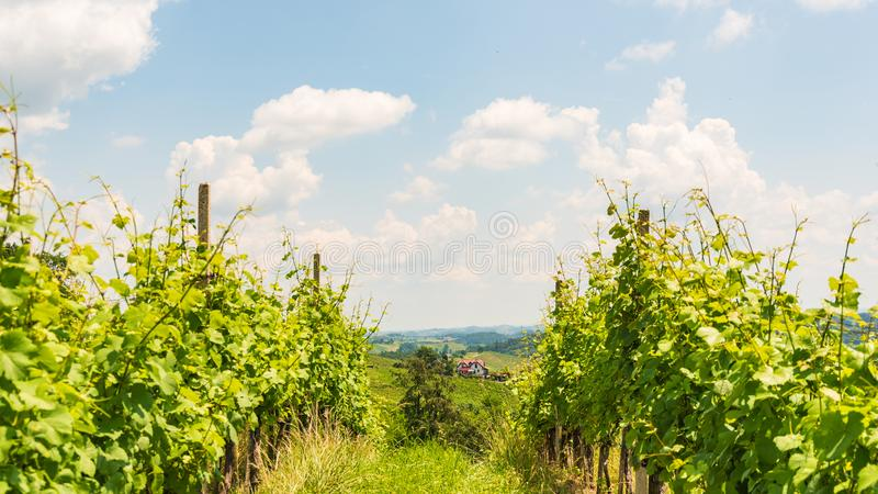 Sulztal,施蒂里亚/奥地利- 2018年6月2日:葡萄园Sulztal莱布尼兹地区著名目的地酒街道区域南部施蒂里亚 免版税库存图片