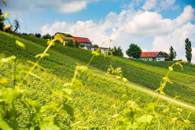 Sulztal, Styria/Αυστρία - 2 Ιουνίου 2018: Αμπελώνων Sulztal Leibniz νότιο Styria περιοχής οδών κρασιού προορισμού περιοχής διάσημ στοκ εικόνα