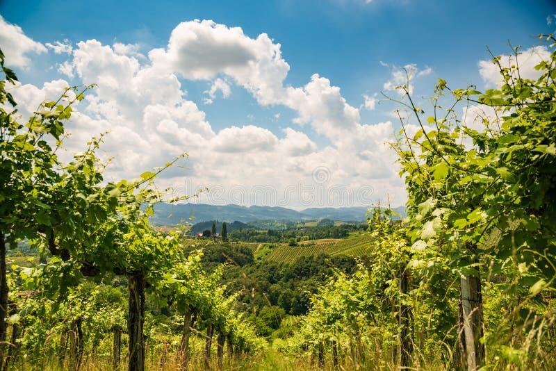 Sulztal, Styria/Αυστρία - 2 Ιουνίου 2018: Αμπελώνων Sulztal Leibniz νότιο Styria περιοχής οδών κρασιού προορισμού περιοχής διάσημ στοκ εικόνες