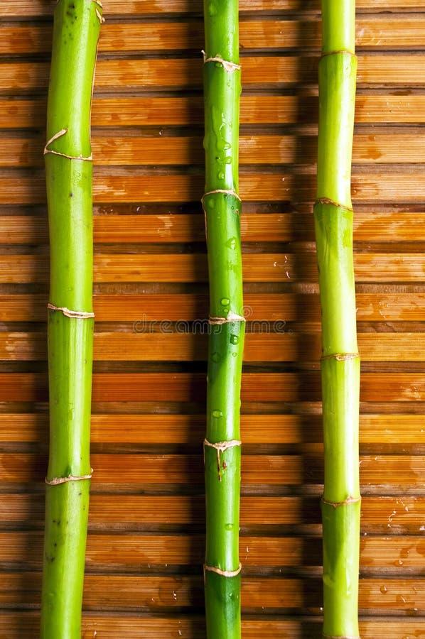sumário, Ásia, fundo, bambu, biológico, clima, cultura, decoração, feng, feng-shui, fengshui, floresta, frescor, jardim imagem de stock royalty free