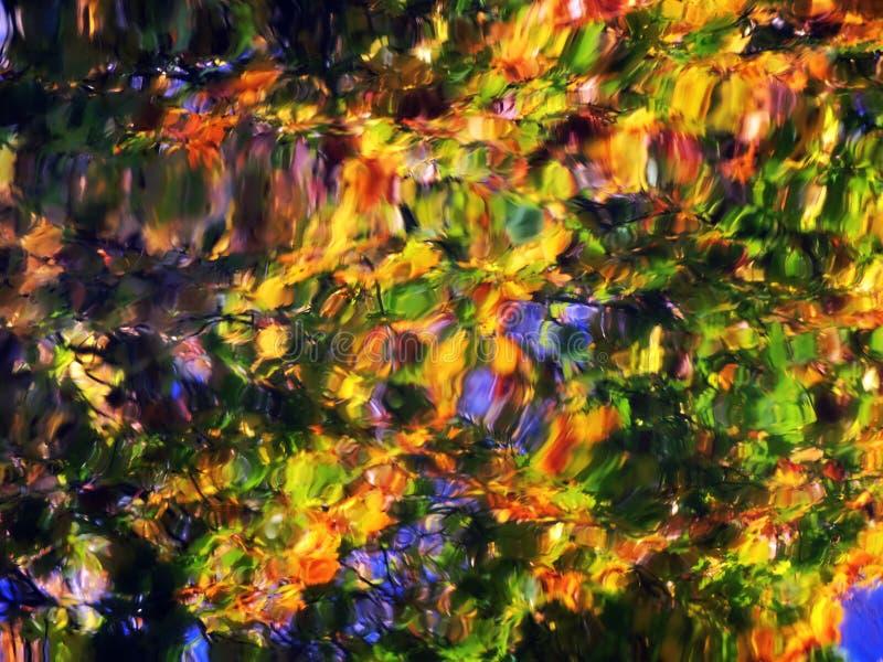 Sumário colorido da reflexão das folhas imagem de stock royalty free