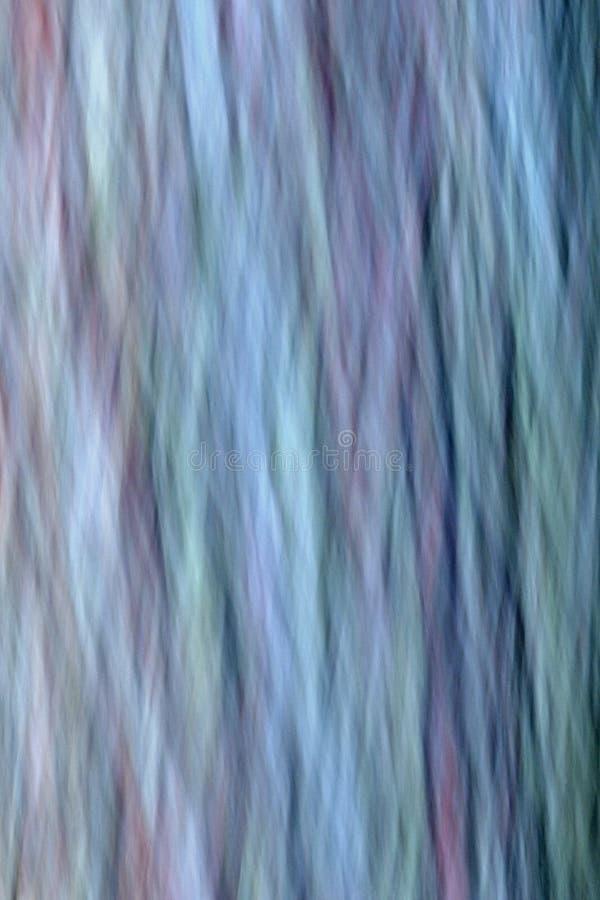 Sumário da casca de Cypress calvo, sul Florida fotografia de stock
