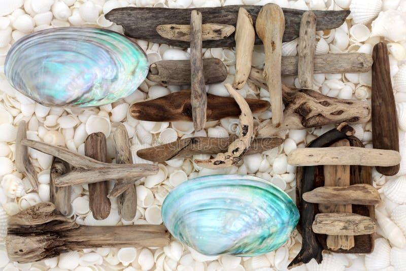 Sumário da concha do mar e da madeira lançada à costa foto de stock royalty free