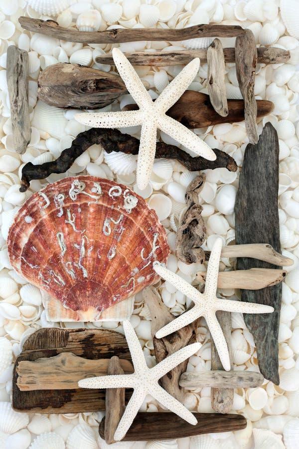 Sumário da concha do mar e da madeira lançada à costa imagens de stock royalty free