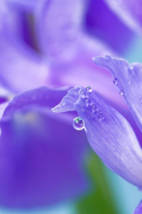 Sumário da flor imagem de stock