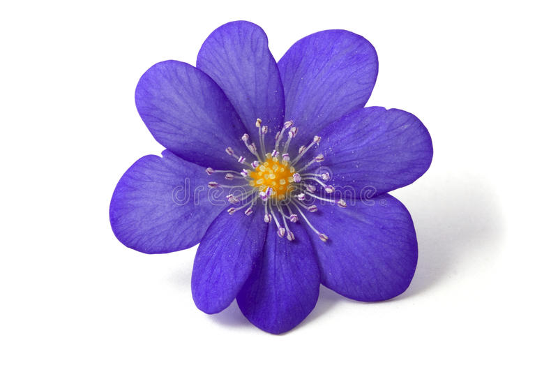 Sumário da flor violeta foto de stock royalty free