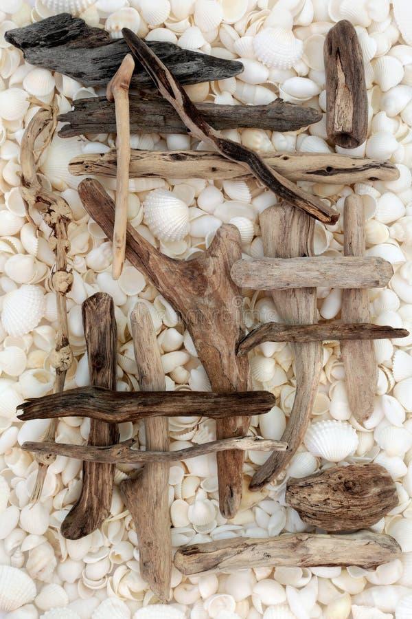 Sumário da madeira lançada à costa e da concha do mar imagem de stock