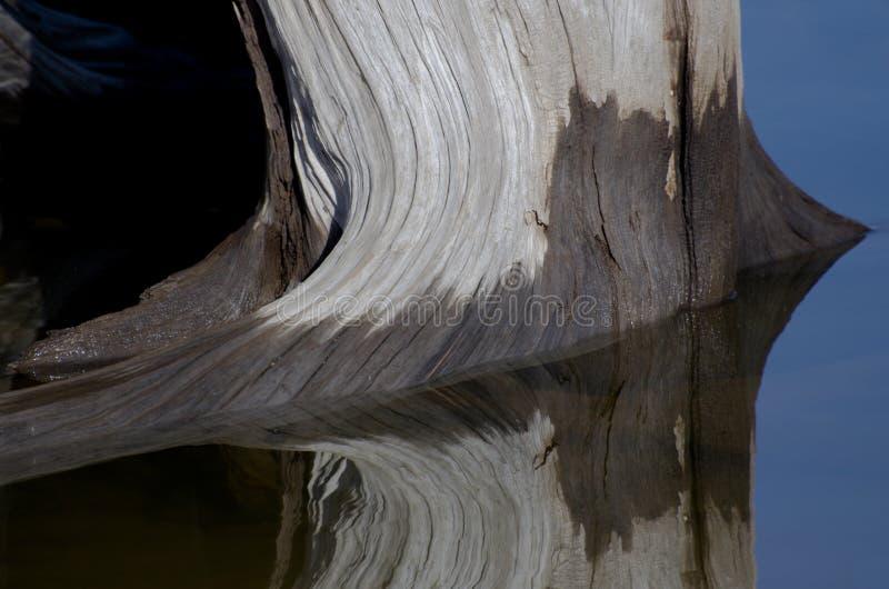 Sumário da natureza - madeira lançada à costa que reflete na água imagem de stock